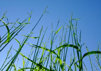 Grass: the Biowert raw material
